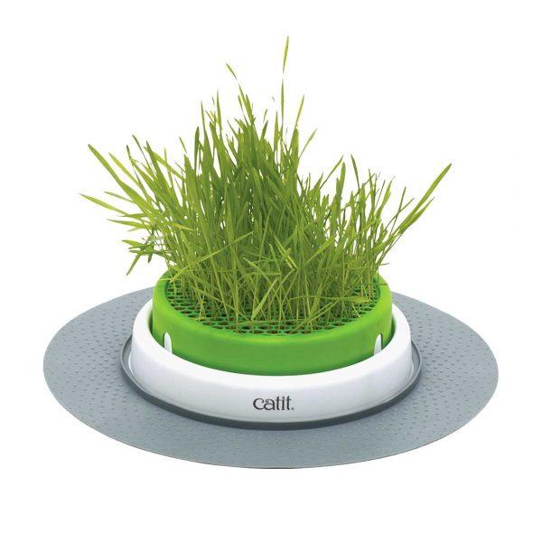 Catit Germinador de Pasto Cat Grass