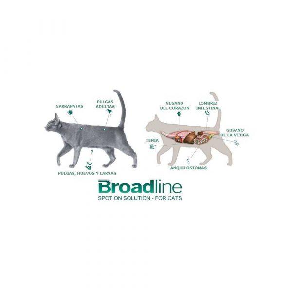 Broadline Antiparasitario 0.6 a 2.5 Kg Interno / Externo